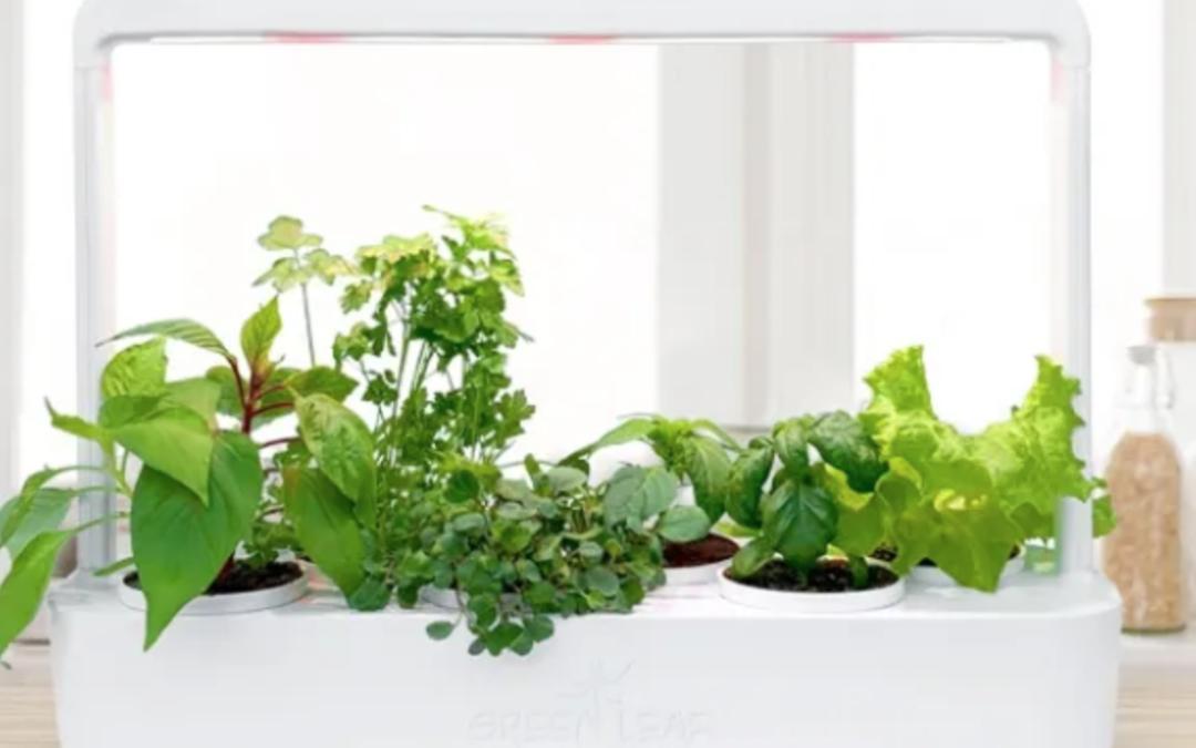 Horta inteligente pode ser tendência para cultivo caseiro